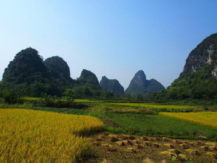 Les rizières aux alentours de Yangshuo