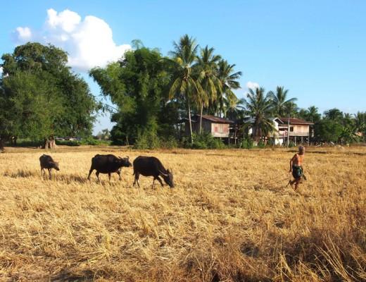 landscape don khone laos