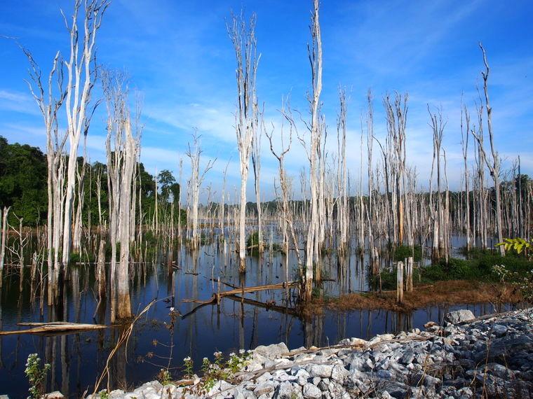arbre mort lac laos