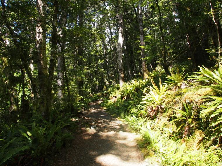 kepler track bush