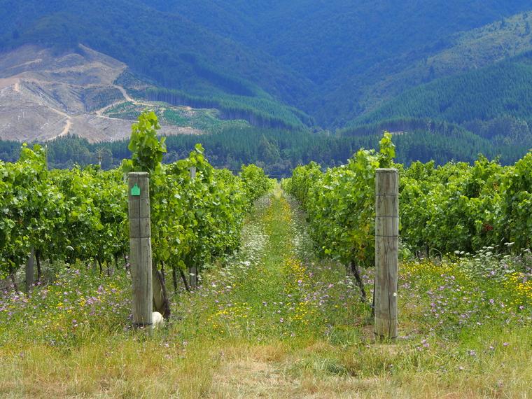vigne nouvelle zelande